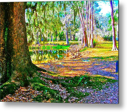 Tree Metal Print featuring the photograph Cool Feeling by Frank SantAgata