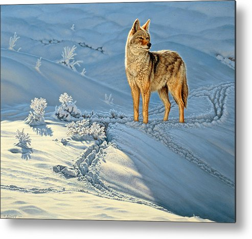 Wildlife Metal Print featuring the painting the Coyote - God's Dog by Paul Krapf
