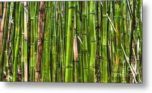 Bamboo Metal Print featuring the photograph Bamboo by Dustin K Ryan