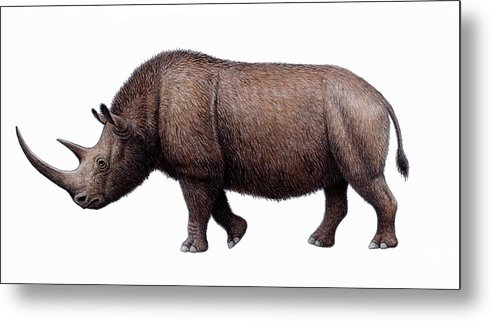 Coelodonta Antiquitatis Metal Print featuring the photograph Woolly Rhinoceros, Artwork by Mauricio Anton