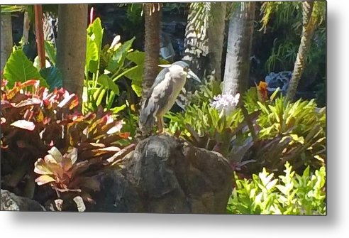Birds Metal Print featuring the photograph Perched Bird by Silvie Kendall