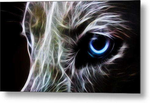 Wolf Metal Print featuring the drawing One Eye by Aged Pixel
