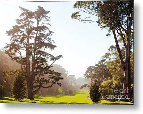 San Francisco Images Metal Print featuring the photograph Golden Gate Park San Francisco by Artist and Photographer Laura Wrede