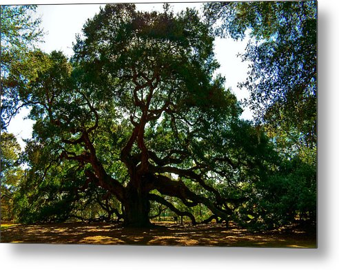 Tree Metal Print featuring the photograph Angel Oak Tree 2004 by Louis Dallara