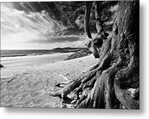 Carmel Beach Tree Roots Sandy Monterey Peninsula California Coastline Pacific Ocean Usa Black And Wh Metal Print featuring the photograph Tree Roots Carmel Beach by George Oze