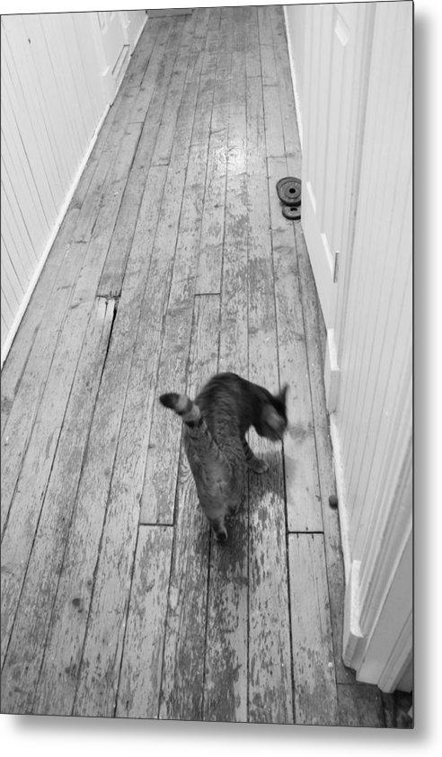 Cat Metal Print featuring the photograph Kitty by Nina Mirhabibi