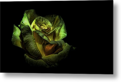 Flower Metal Print featuring the photograph Dramatic Beauty by Cecil Fuselier