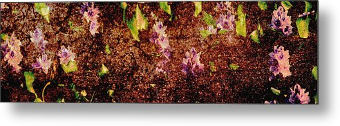 Abstract Metal Print featuring the photograph Water Flowers Vietnam by Skip Nall