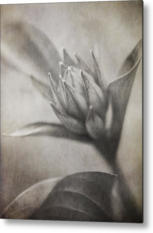 Floral Metal Print featuring the photograph Mystic Anticipation by Dale Kincaid