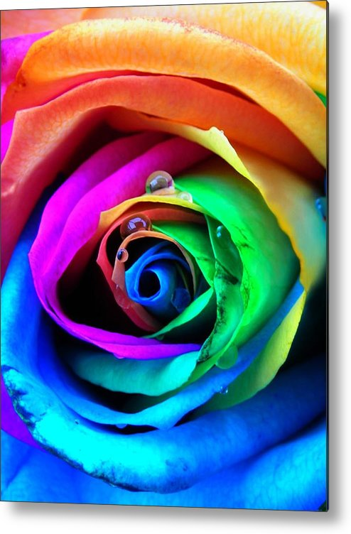 Rainbow Metal Print featuring the photograph Rainbow Rose by Juergen Weiss