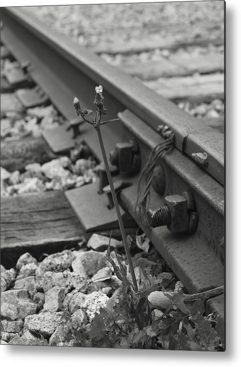 Weed Metal Print featuring the photograph The Tenacity Of Nature Greyscale by MM Anderson