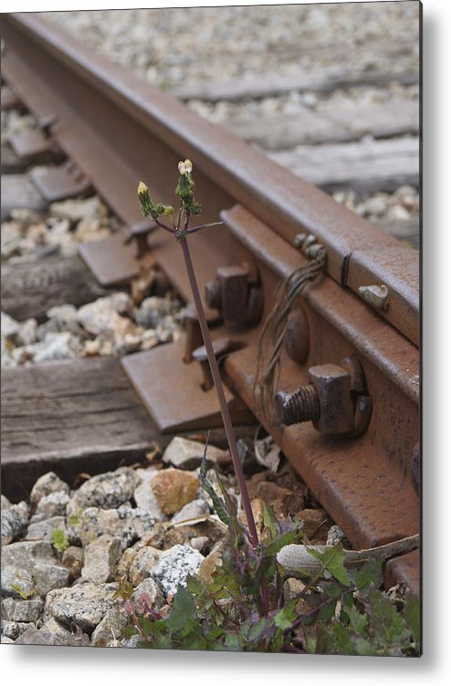 Weed Metal Print featuring the photograph The Tenacity Of Nature by MM Anderson