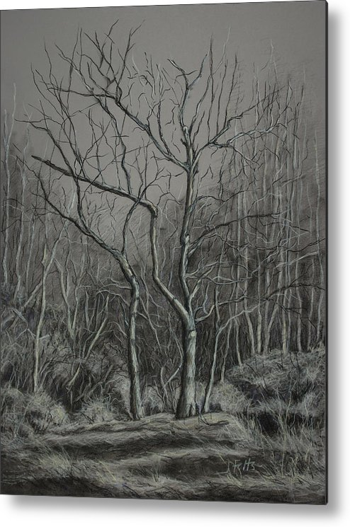 Trees Metal Print featuring the drawing Trees Along The Greenway by Janet Felts