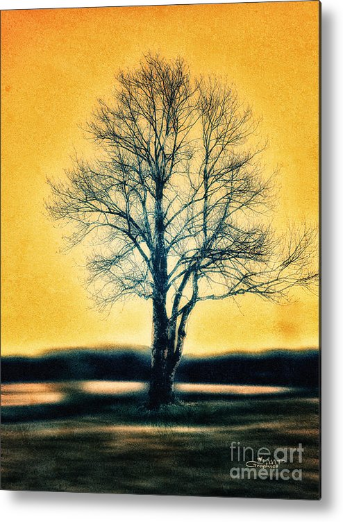 Photo Metal Print featuring the photograph Leafless Tree by Jutta Maria Pusl