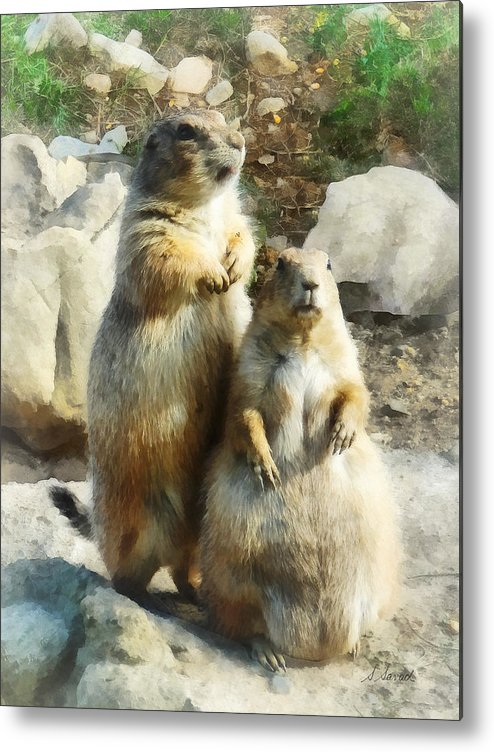 Prairie Dog Metal Print featuring the photograph Prairie Dog Formal Portrait by Susan Savad