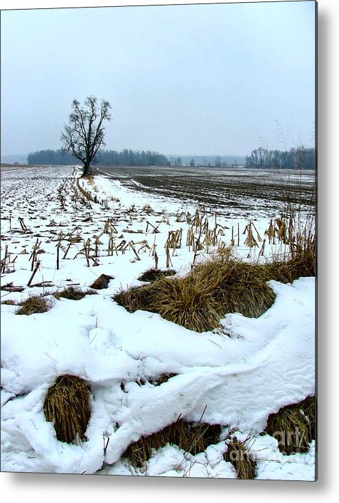 Amish Metal Print featuring the photograph Amish Field In Winter by Julie Dant