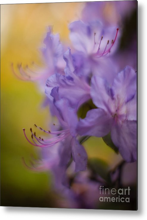 Flower Metal Print featuring the photograph Purple Whispers by Mike Reid