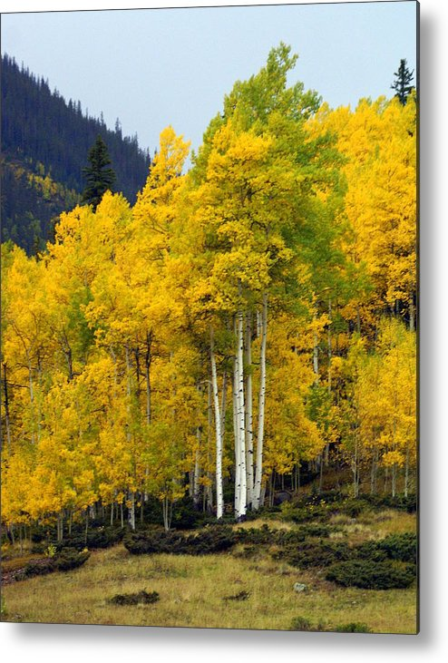Fall Colors Metal Print featuring the photograph Aspen Fall 3 by Marty Koch