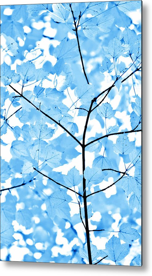 Leaf Metal Print featuring the photograph Blue Leaves Melody by Jennie Marie Schell