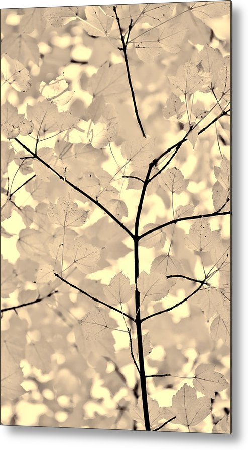 Leaf Metal Print featuring the photograph Leaves Fade To Beige Melody by Jennie Marie Schell