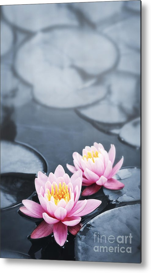 Blossoms Metal Print featuring the photograph Lotus Blossoms by Elena Elisseeva