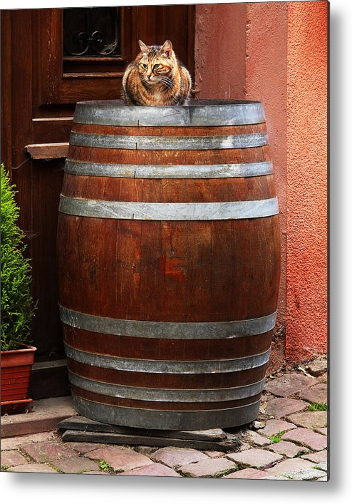 Cat Metal Print featuring the photograph Cat Guarding A Wine Barrel In Alsace by Greg Matchick