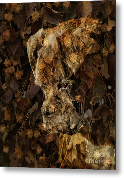 Dog Boxer Dog Metal Print featuring the digital art Contemplation by Judy Wood