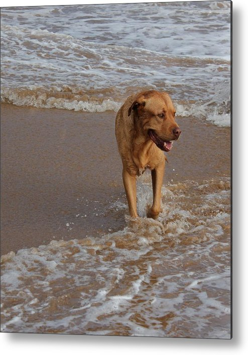 Dog Photo Metal Print featuring the digital art Waiting For Dad by Bonita Hensley
