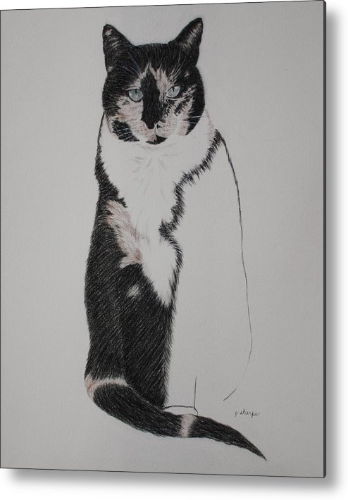 Spirit Cat Essence Metal Print featuring the drawing Friend II by Patsy Sharpe