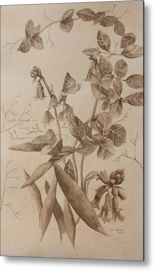 Botanical Metal Print featuring the painting English Bluebells And Butterfly by Patsy Sharpe