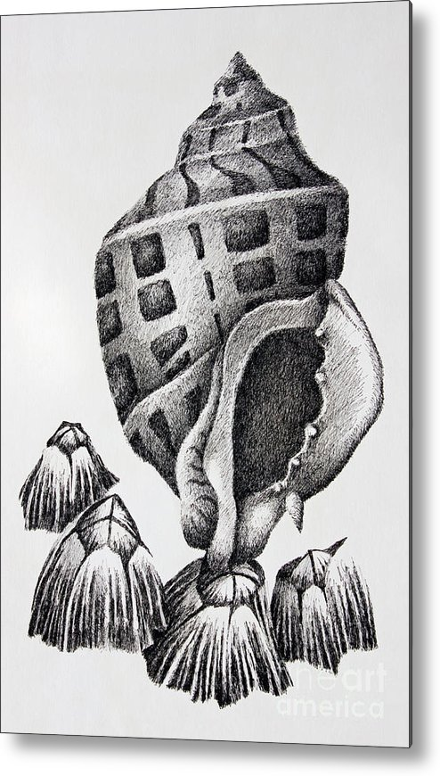 Seashell Print Metal Print featuring the drawing Seashell And Barnacles by James Williamson