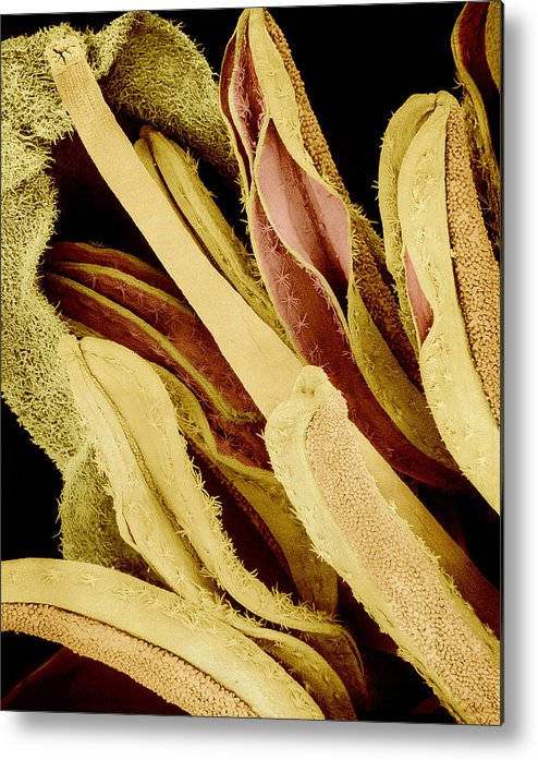 Sem Metal Print featuring the photograph Flower Reproductive Parts, Sem by Susumu Nishinaga