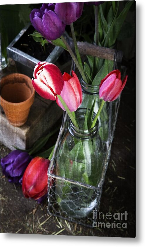 Barn Metal Print featuring the photograph Beautiful Spring Tulips by Edward Fielding
