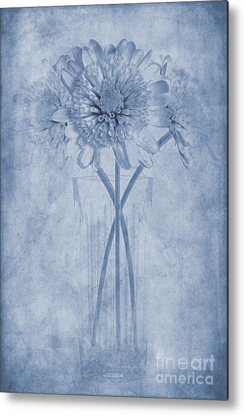 Chrysanthemum Metal Print featuring the photograph Chrysanthemum Cyanotype by John Edwards