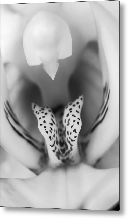 3scape Photos Metal Print featuring the photograph High Key Orchid by Adam Romanowicz