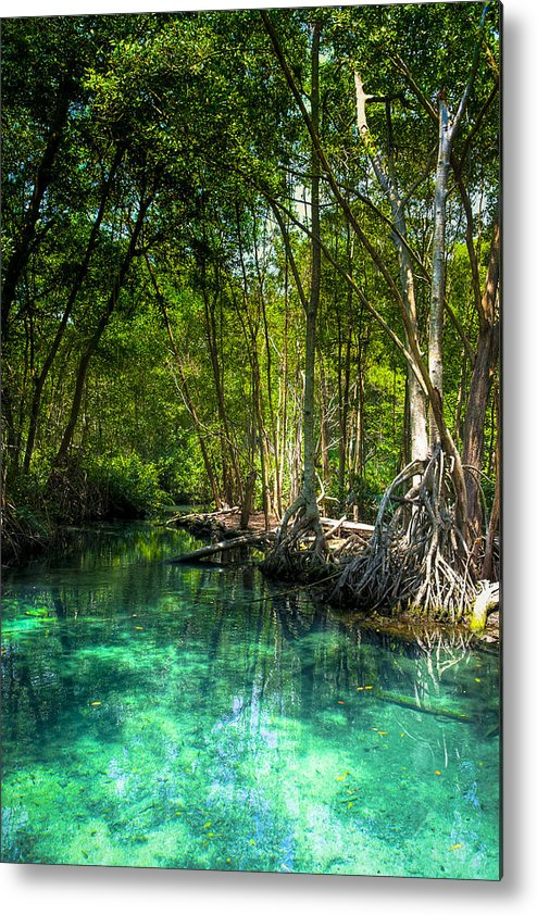Blue Metal Print featuring the photograph Lost Lagoon On The Yucatan Coast by Mark E Tisdale