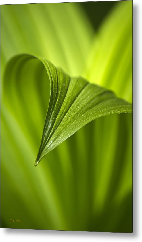 Nature Metal Print featuring the photograph Nature Unfurls by Christina Rollo
