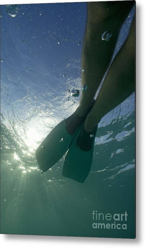 Snorkeling Metal Print featuring the photograph Snorkeller Legs With Flippers Underwater by Sami Sarkis