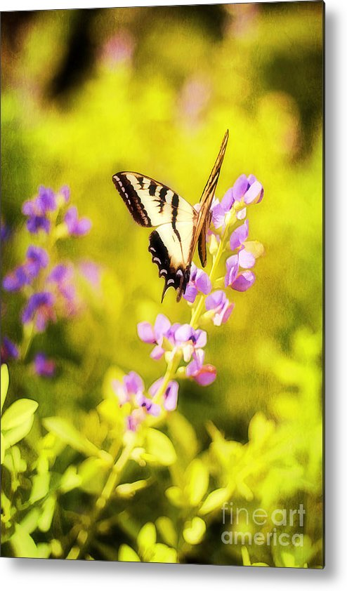 Painterly Metal Print featuring the photograph Those Summer Dreams by Darren Fisher