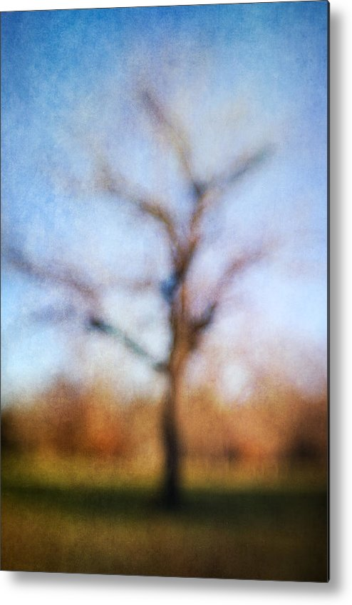 Blur Metal Print featuring the photograph Warner Park Tree by David Morel