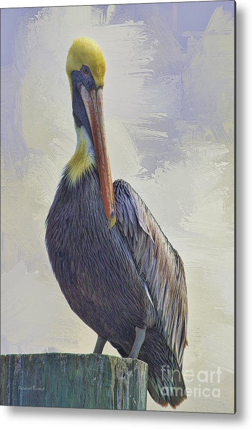 Pelican Metal Print featuring the photograph Waterway Pelican by Deborah Benoit