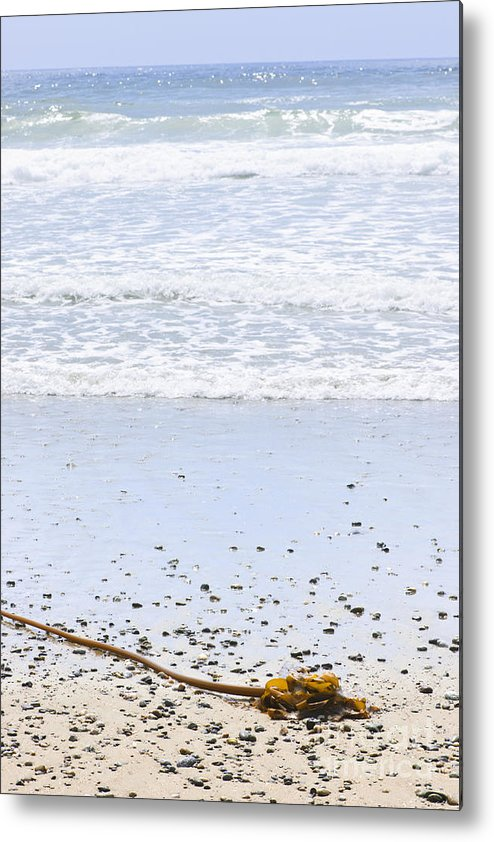 Pacific Metal Print featuring the photograph Beach Detail On Pacific Ocean Coast by Elena Elisseeva