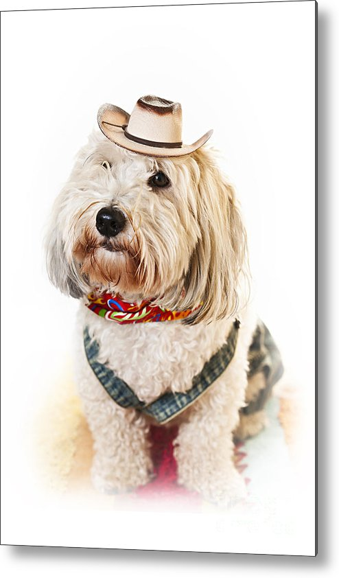 Dog Metal Print featuring the photograph Cute Dog In Halloween Cowboy Costume by Elena Elisseeva