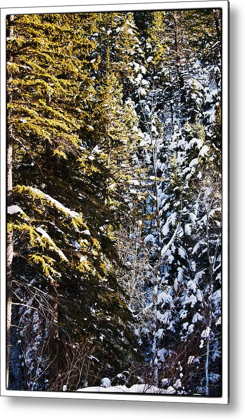 Nature Metal Print featuring the photograph Trees In Taos Village by Lisa Spencer