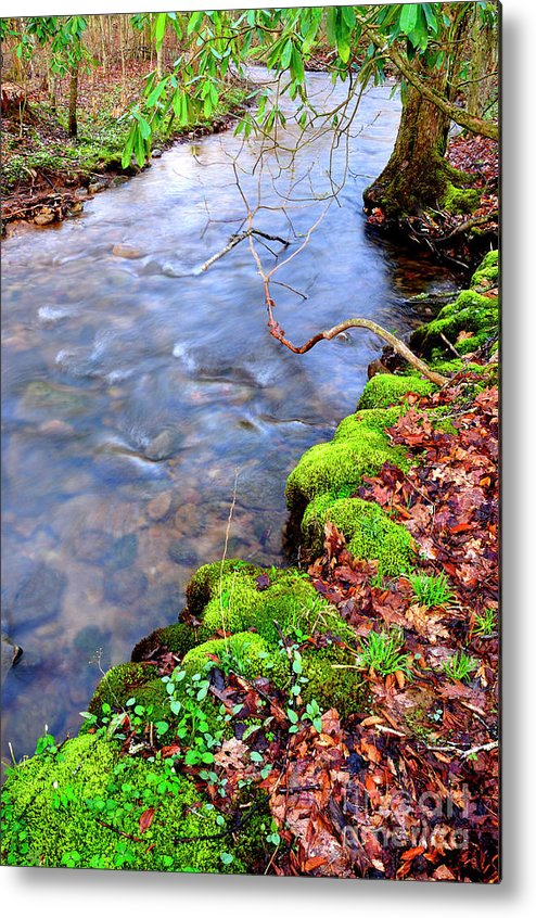 West Virginia Metal Print featuring the photograph Middle Fork Of Williams River by Thomas R Fletcher