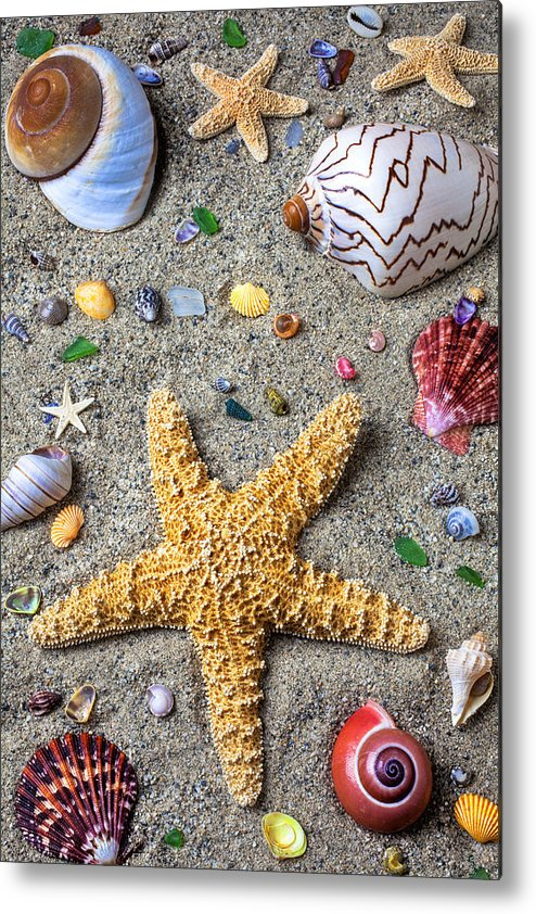 Starfish Metal Print featuring the photograph Day At The Beach by Garry Gay