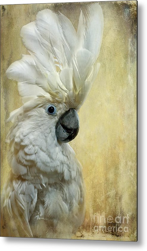 Cockatoo Metal Print featuring the photograph Glamour Girl by Lois Bryan