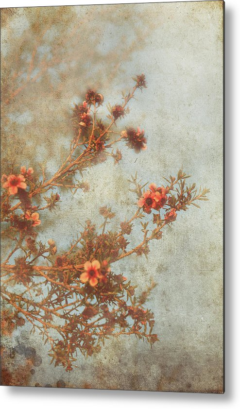 Flowers Metal Print featuring the photograph Love Is In Bloom by Laurie Search