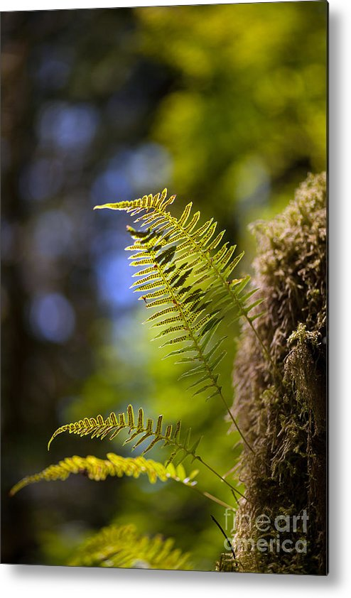 Forest Metal Print featuring the photograph Renewal Ferns by Mike Reid