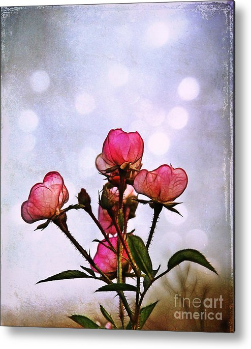 Rose Metal Print featuring the photograph Reaching For The Light by Judi Bagwell